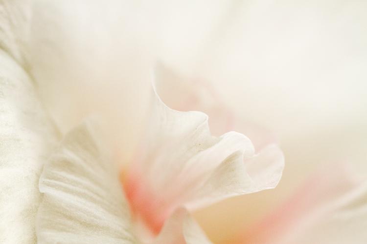 Lightbox macro photography 02