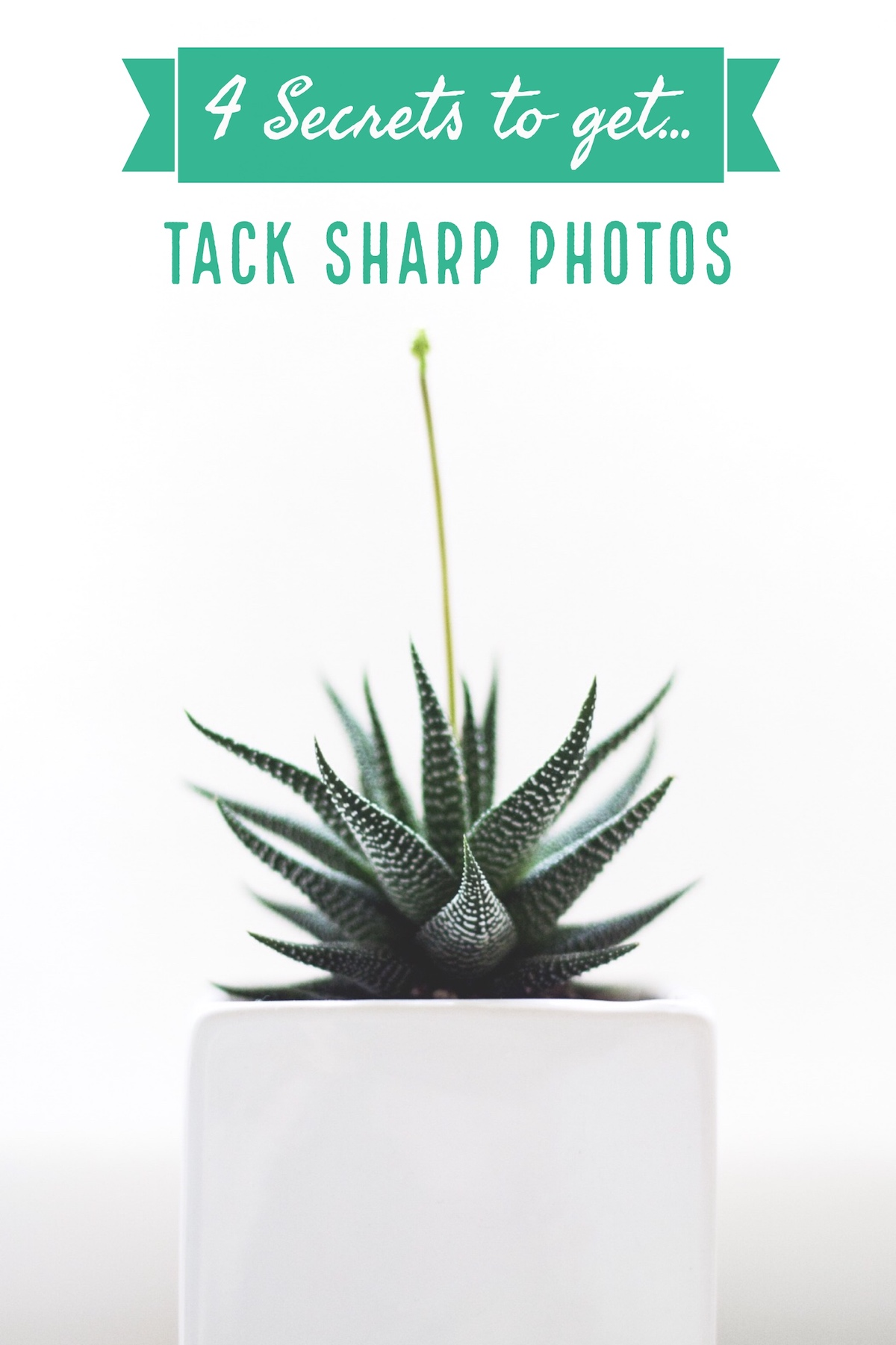 4 Secrets for How to Get Tack Sharp Photos