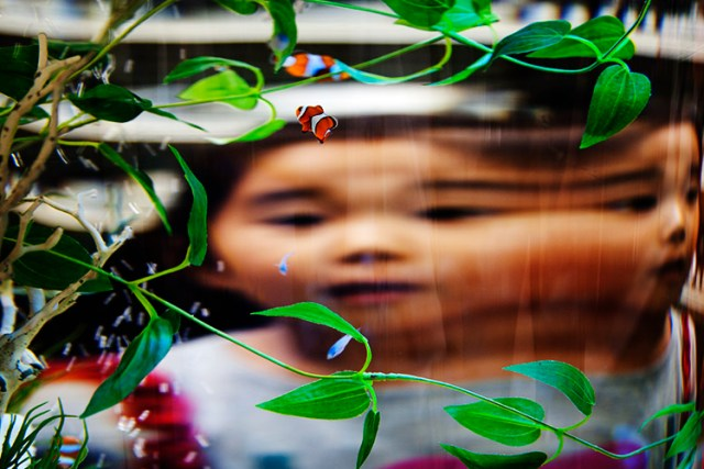 photography-through-glass08