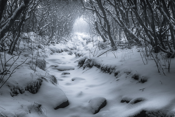 Winter Photography 5