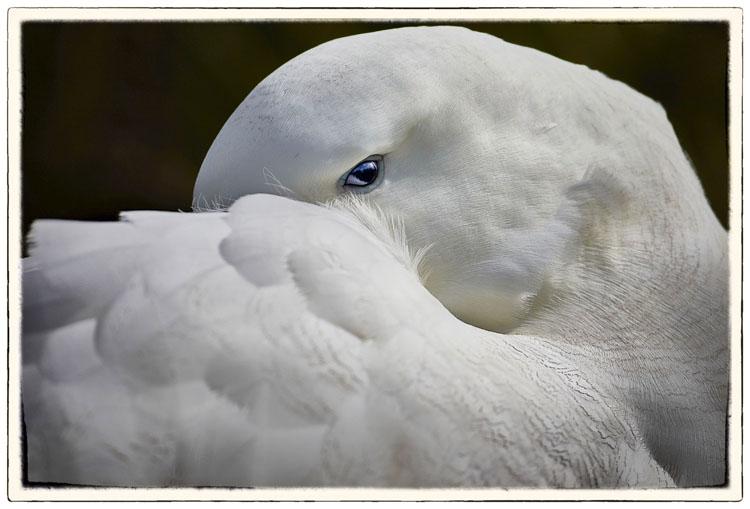 Peter Eastway Wandering Albatross