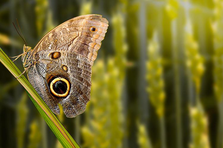 如何使用Photoshop owl创建边缘光效果