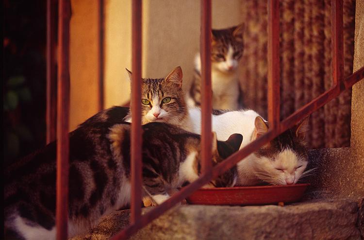 Tips photos cats 01