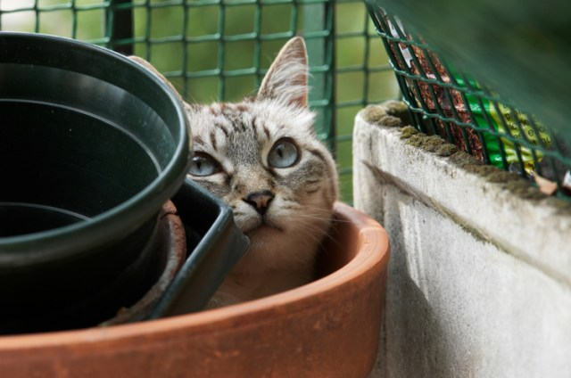 Tips photos cats 04