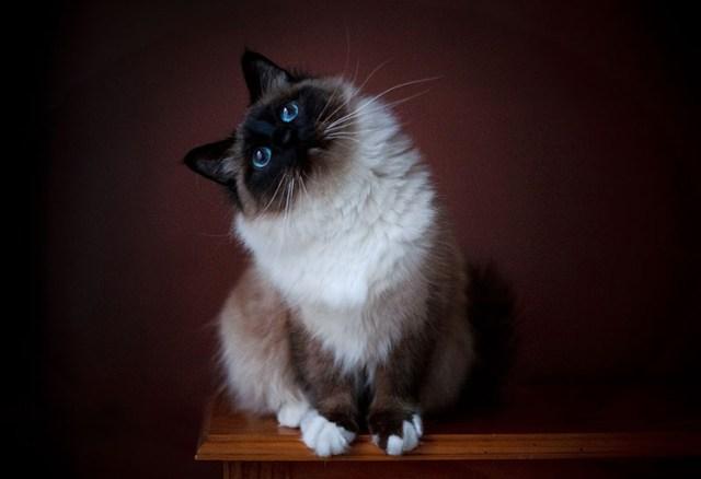 Tips photos cats 09
