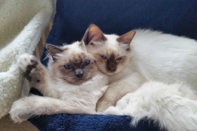 Tips photos cats 11
