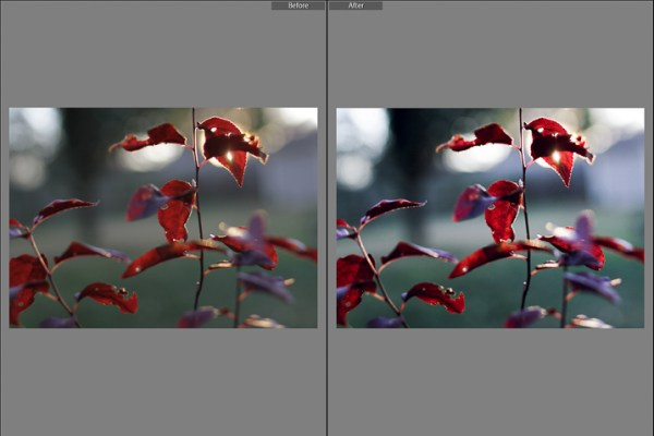 How to Simulate the Look of Analog Film Using Lightroom