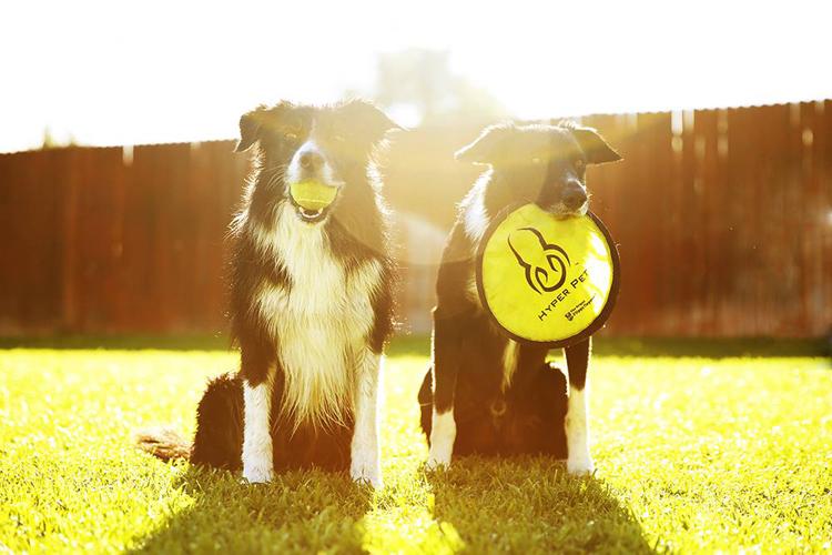 cães com luz de fundo