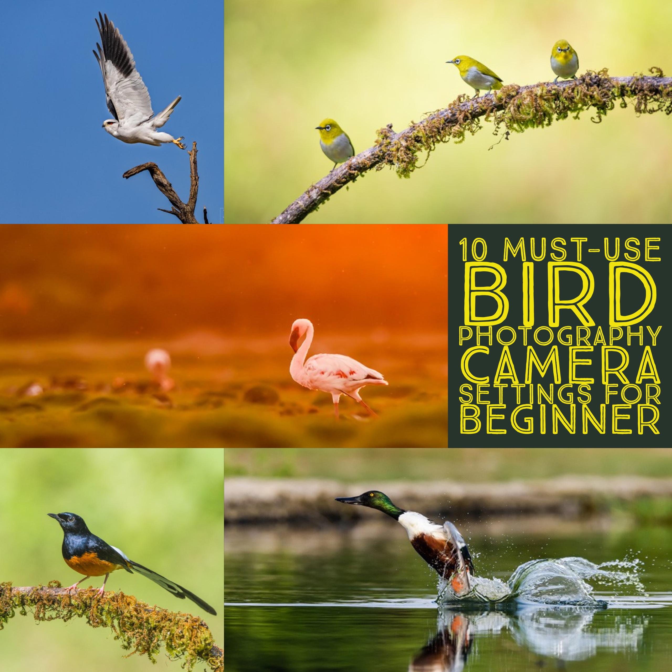 10 configurações obrigatórias de câmeras fotográficas de pássaros para iniciantes