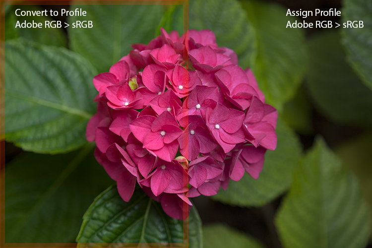 4b The Effect Of Misusing Assign Profile - 6 Color Settings in Photoshop That You Need to Know