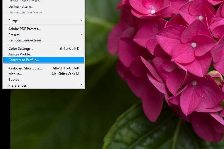 5 Convert to Profile - 6 Color Settings in Photoshop That You Need to Know
