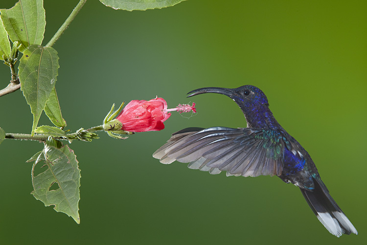 Photograph hummingbirds 03