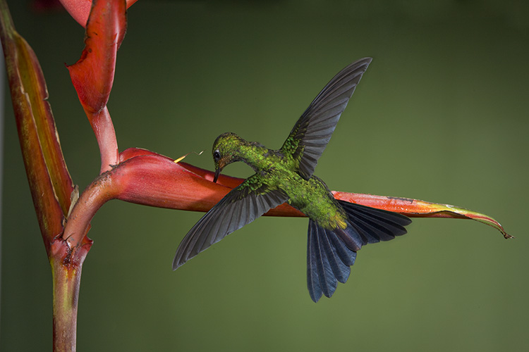 Photograph hummingbirds 04