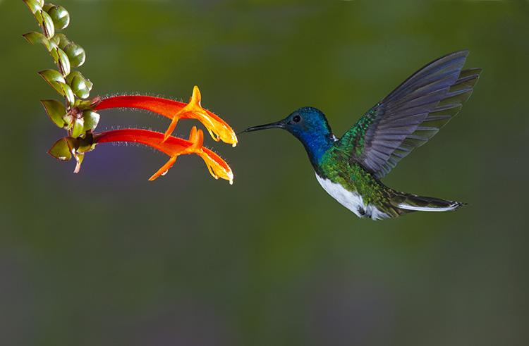 Photograph hummingbirds 06