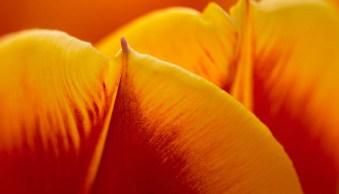 Tips for Taking Better Flower Photos