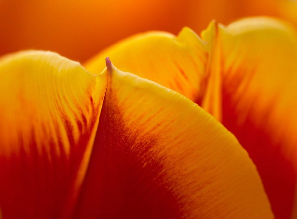 Tips for Taking Better Flower Photos