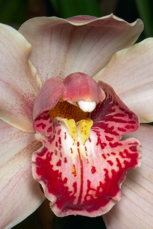 How to Take Better Flower Photos orchid flash close-up