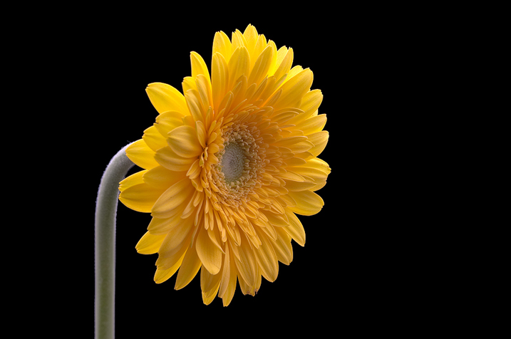 How to Take Better Flower Photos