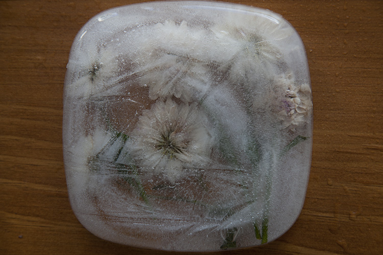 How to do Photography of Frozen Flowers