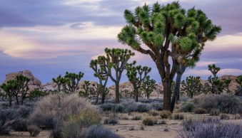 Joshua Tree National Park, California, by Anne McKinnell