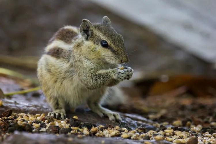 Wildlife photography telephoto lens 03