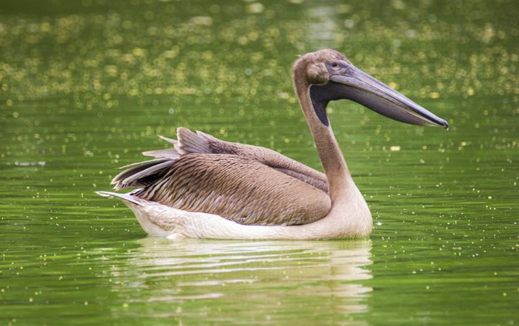 Wildlife photography telephoto lens 05