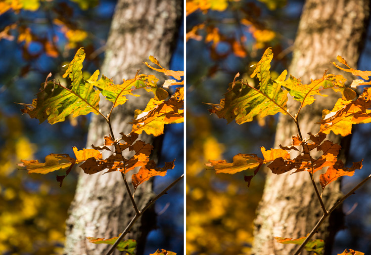 Auto White Balance: Yay or Nay?