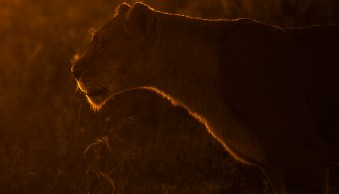 How to do More Creative Wildlife Photography by using Rim Lighting