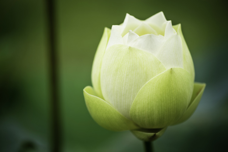 Three Good Reasons To Learn More About Photography - flower