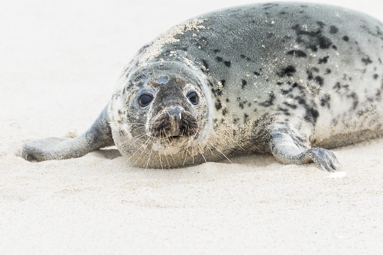 What would you do - seal portrait