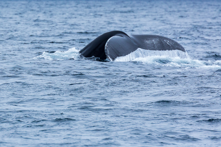 Troubleshooting 4 Tricky Photography Situations What Would You Do - humpback whale tail