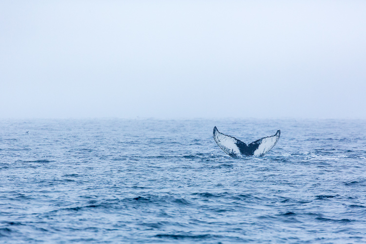 Troubleshooting 4 Tricky Photography Situations - What Would You Do? - humpback whale