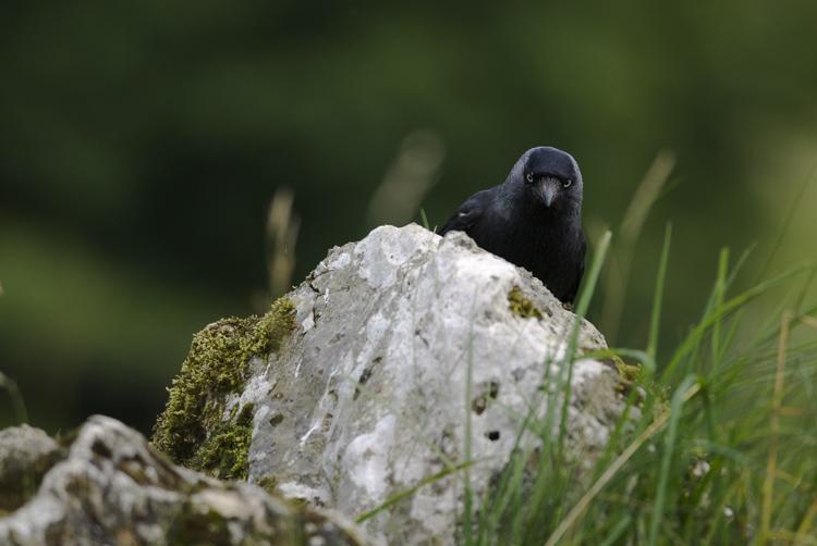 wildlife photography lenses