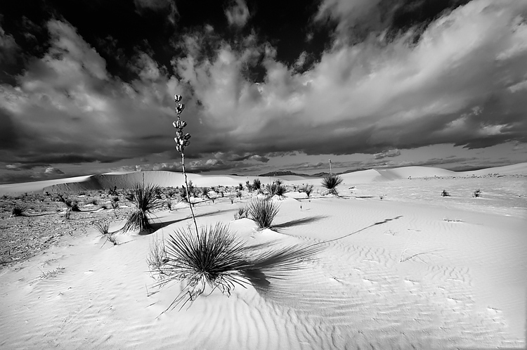 direct light sand dunes