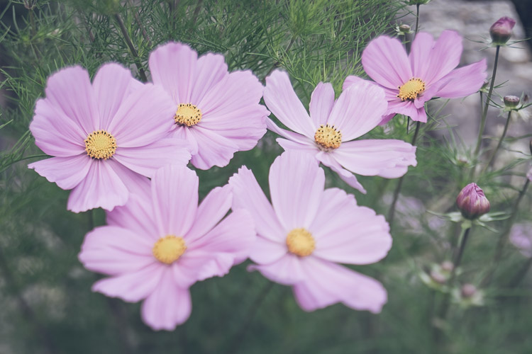 flowers - How to Find Interesting Subjects for Photography in a Boring Place