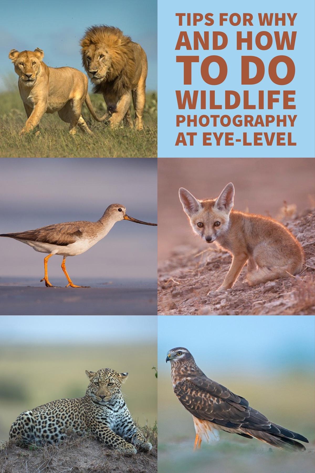 为什么和如何在视线范围内进行野生动物摄影