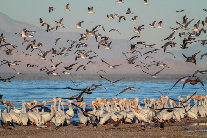 海鸥飞越鹈鹕,安妮·麦金内尔(Anne McKinnell)-如何制作讲故事的风景照片-4个步骤