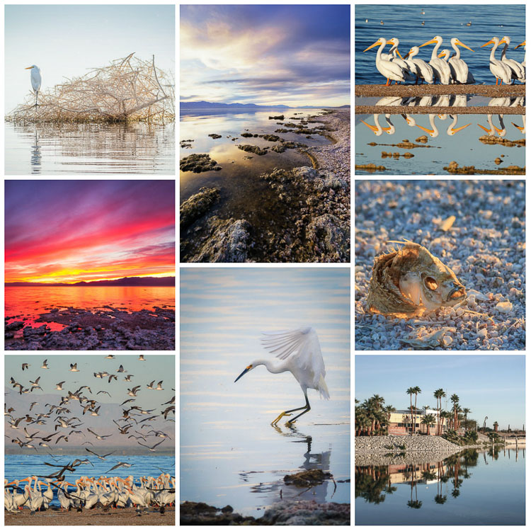 Salton Sea Collage by Anne McKinnell