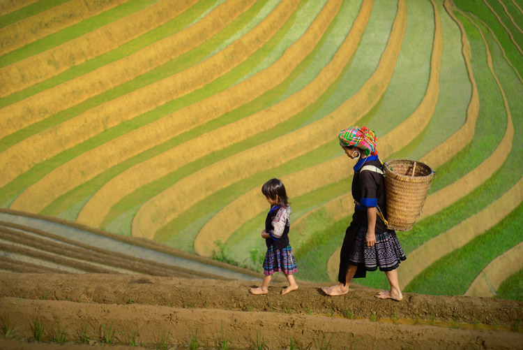 Putting the Fine Art into Travel Photography - Vietnam rice terraces