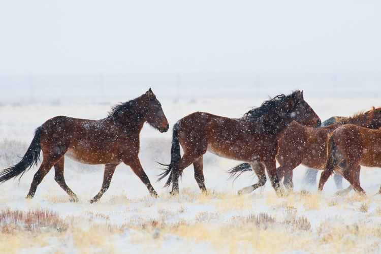 How to Make your Winter Images Pop with Luminar - Running horses