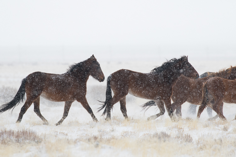 How to Make your Winter Images Pop with Luminar - running horses raw image