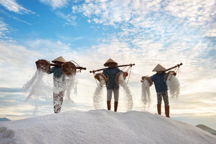 Salt Harvesters