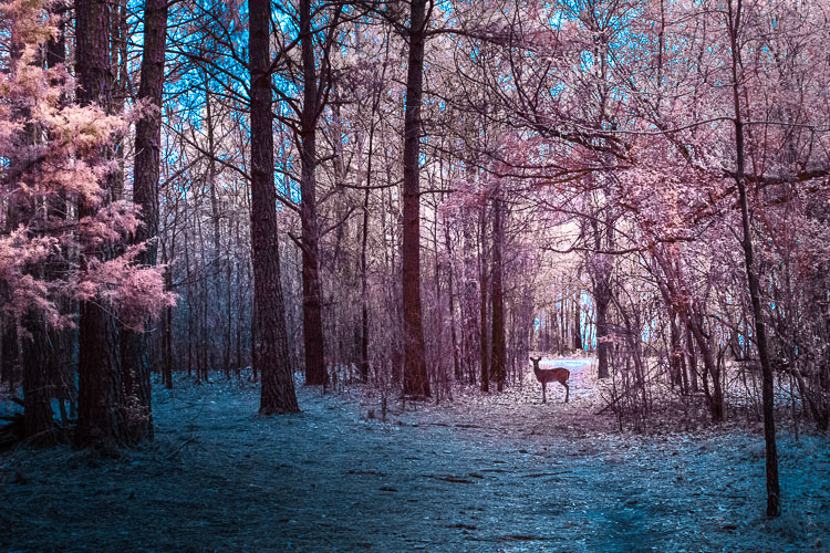My First Time Shooting Infrared Photography