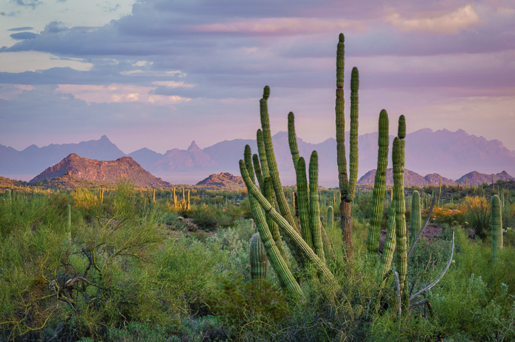 Ajo, Arizona by Anne McKinnell - Getting Started with Landscape Photography - 4 Easy Tips for Beginners