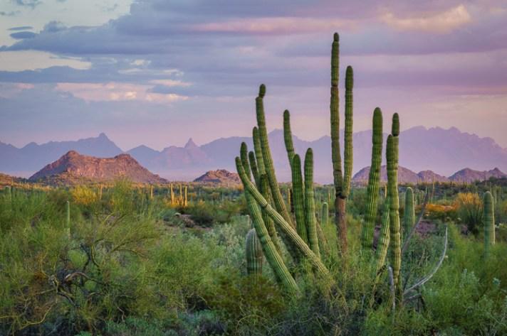 Anne McKinnell撰写的亚利桑那州阿霍-风景摄影入门-4个针对初学者的简单提示