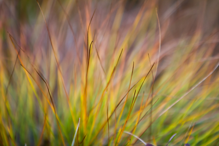 Understanding Aperture and Landscape Photography - Why F16 Isn't the Only Choice