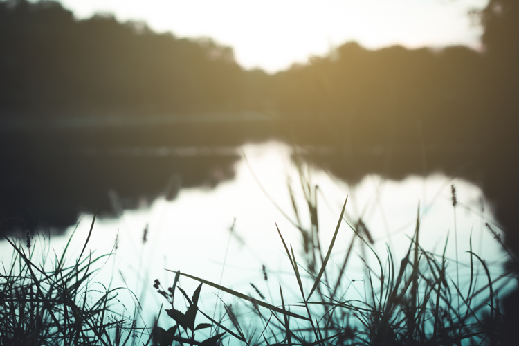 photo of a lake - Tips for Doing Nature Photography at Your Local Parks