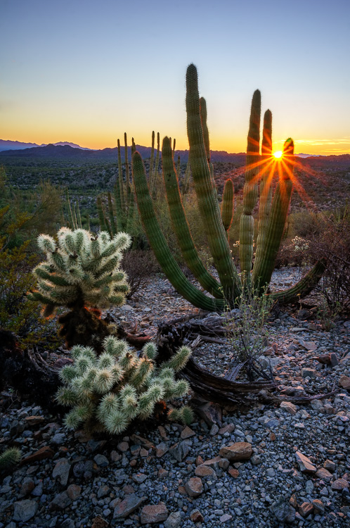 Organ Pipe Cactus National Monument Arizona - Wide-Angle Versus Telephoto Lenses for Landscape Photography