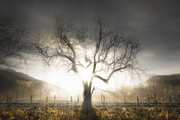 Tips for How to Enhance the Mood in Your Foggy Photos