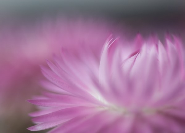 Five Ways to Take Your Macro Photography to the Next Level